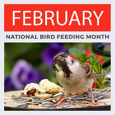 bird feeding month