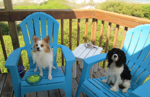 pet friendly outdoor furniture