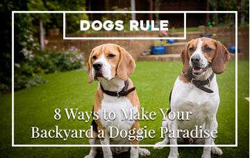 How to Make Your Backyard Pet Friendly